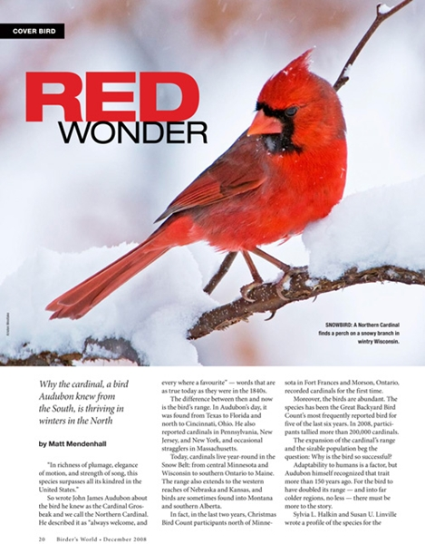 Northern Cardinal was profiled in BirdWatching magazine.