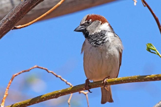 Birdwatching-067.