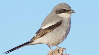 Birdwatching-70.