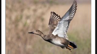 duckhunt4
