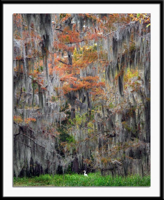 swampcolor