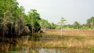 Corkscrew-Swamp-from-Boardwalk