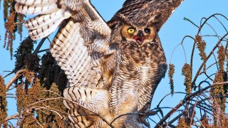 StartledOwl