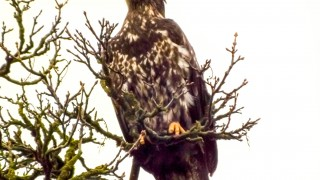 eagles-1176
