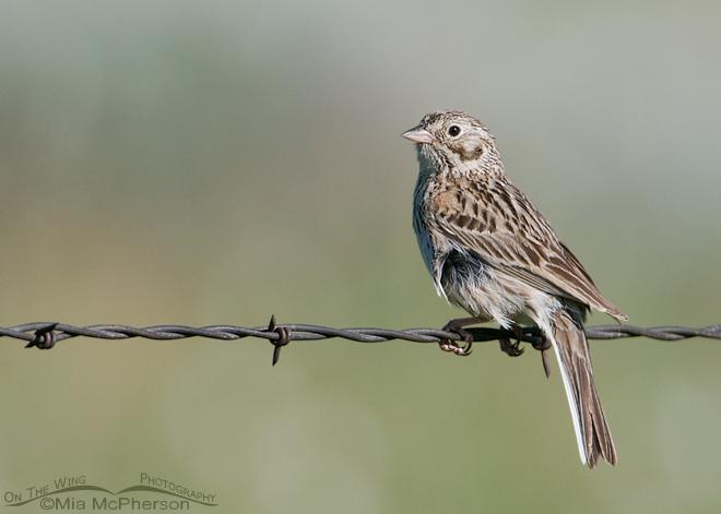 vesper-sparrow-mia-mcpherson-9346