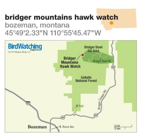 171. Bridger Mountains Hawk Watch, Bozeman, Montana