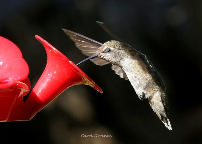 Hummingbird-Sigh-with-name