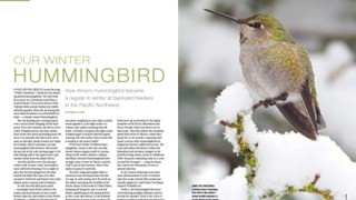 WinterHummingbirdLayout