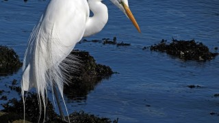 dramatic-egret-at-beach