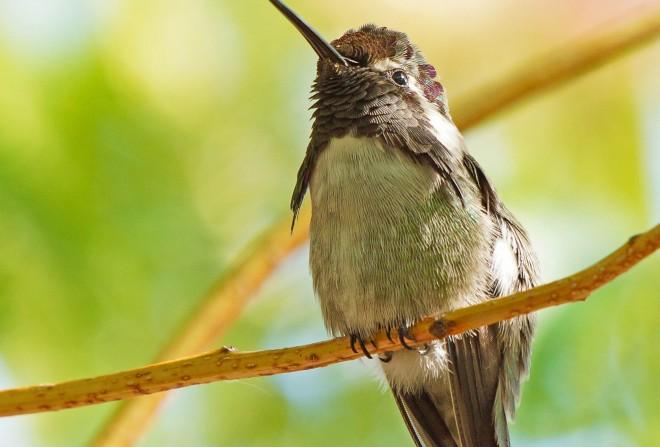 Birdwatching-87