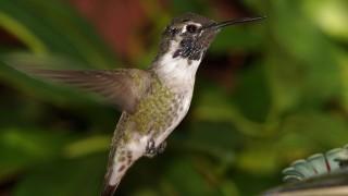 Birdwatching-97