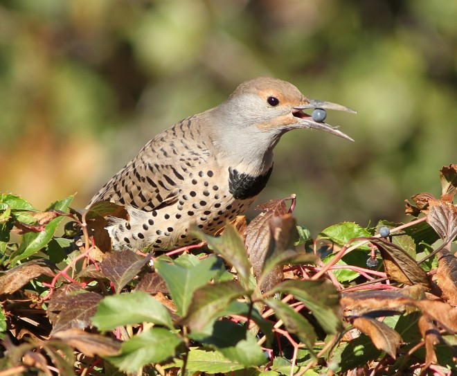 Flicker-Northern-2013-09-23-039