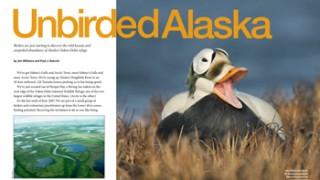 Unbirded-Alaska-w