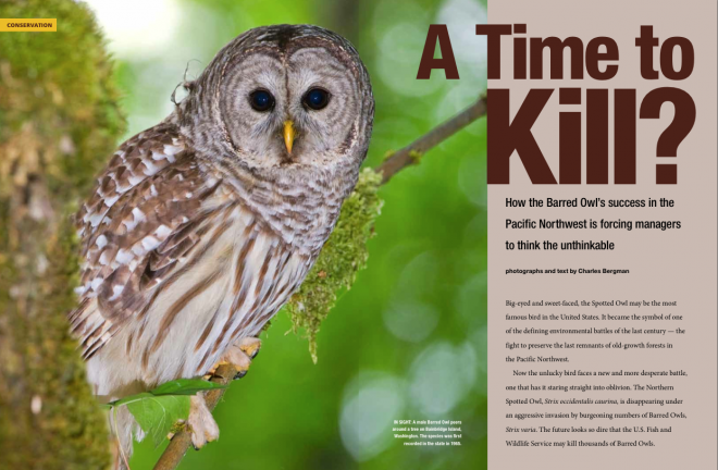 Purde owl by Melody Matthews - issuu