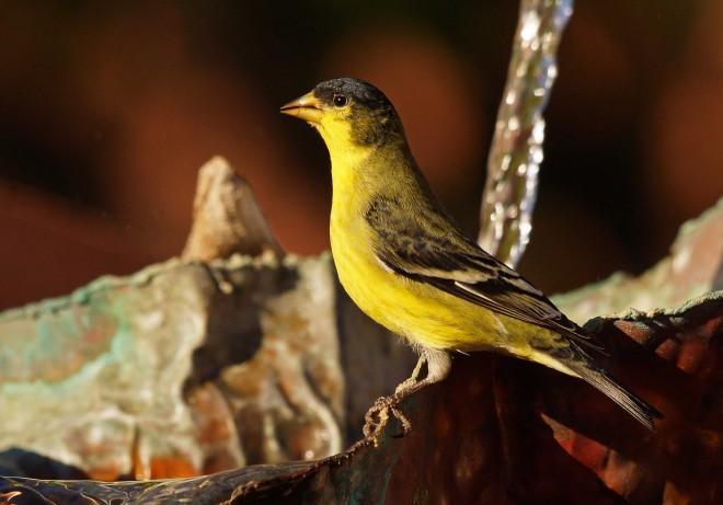 Birdwatching-101