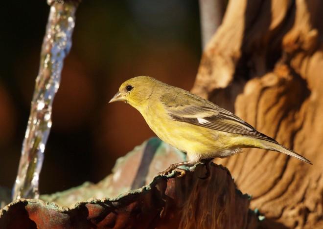 Birdwatching-102