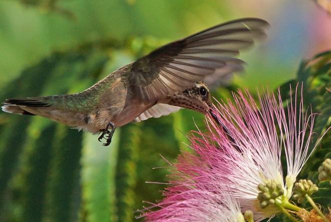 Birdwatching-104