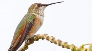 Birdwatching-106