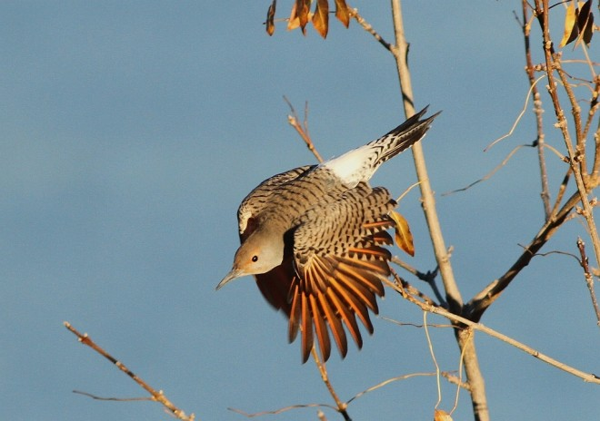 Flicker-Northern-2013-09-27-118