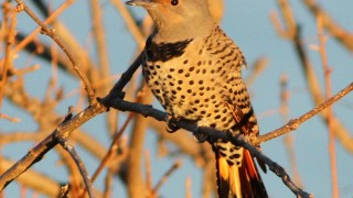 Flicker-Northern-intergrade-2013-10-13-036