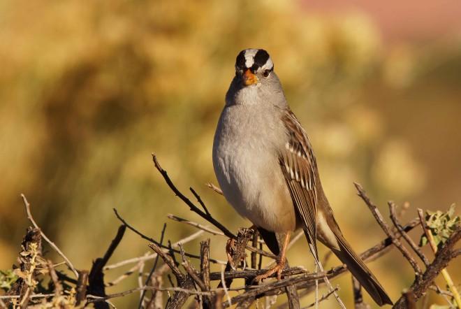 Birdwatching-116