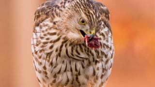 Birdwatching-120