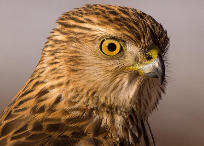 Birdwatching-125