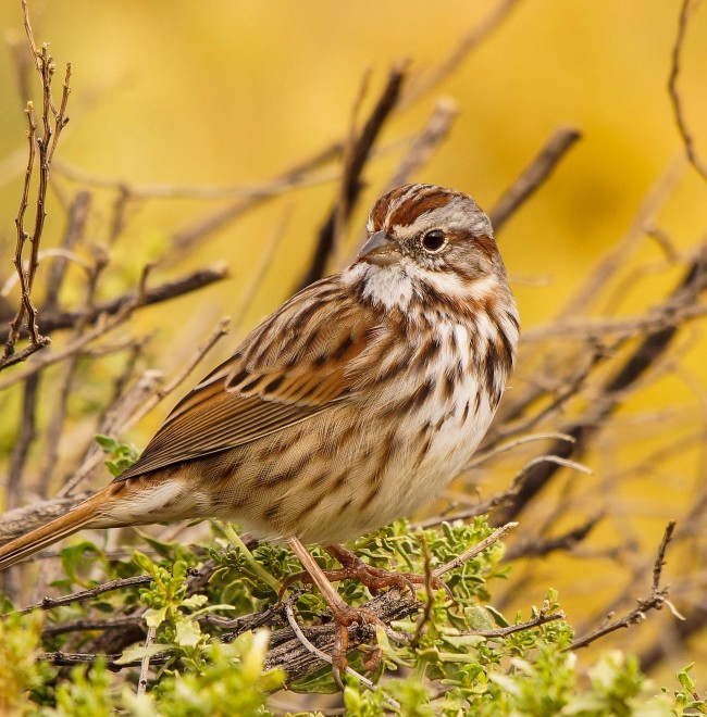 Birdwatching-129