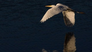 Birdwatching-144