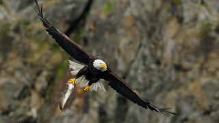 2013_Eagle_June_4