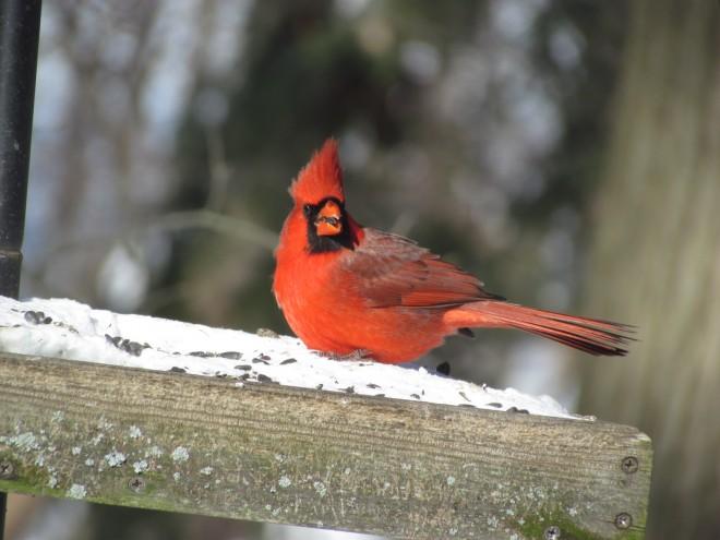 Beaver-Lake-Redbird