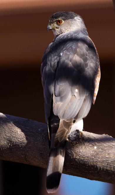 Birdwatching-154