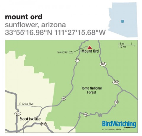 184. Mount Ord, Sunflower, Arizona