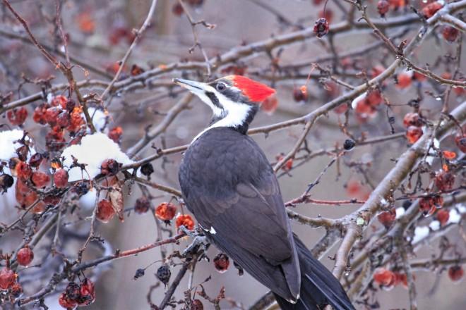 AFTEr-details-Woodpecker