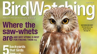 BW0414_Cover_320x180