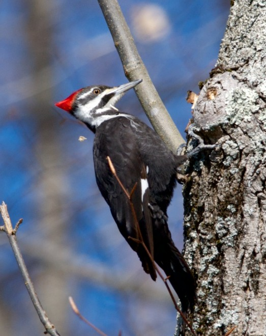 Birding-March-3468