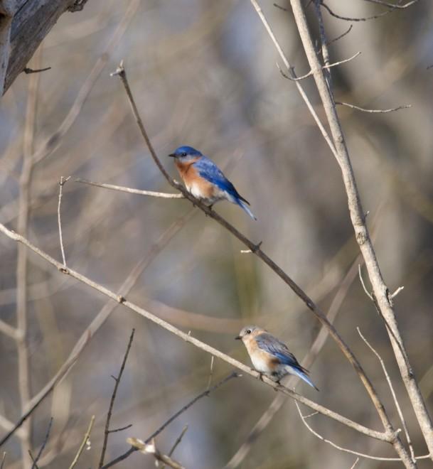 Birding-March-3470