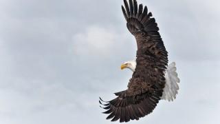 Banking-Eagle
