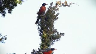 robins2014copright