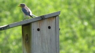 Mrs.Bluebird.Valley
