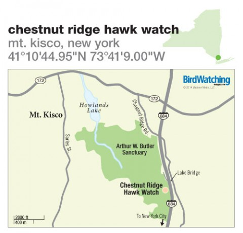 194. Chestnut Ridge Hawk Watch, Mt. Kisco, New York