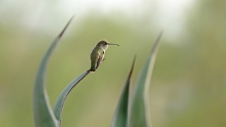 Hummingbird7194Web