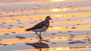 sunriseturnstone