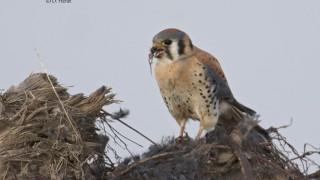 Kestrels-Christmas-dinner-18
