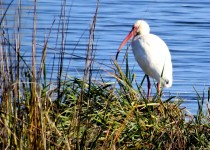 fmitchell_ibis2_caperomain_28dec141
