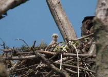 watermarked-Eagle-Day-Owl-Day-448