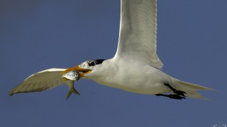 Tern-Lunch-9720fffbbb
