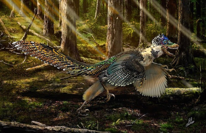 Feathers cover the arms and tail of Zhenyuanlong suni, a new feathered dinosaur from the early Cretaceous (ca. 125 million years ago). Reconstruction by Chuang Zhao.