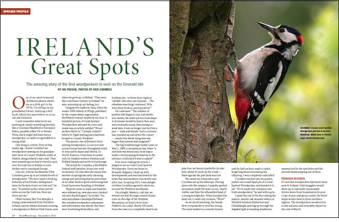 1215 woodpecker spread_660x440