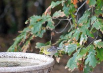 32-On-the-big-birdbath-in-the-sun-10-16-15